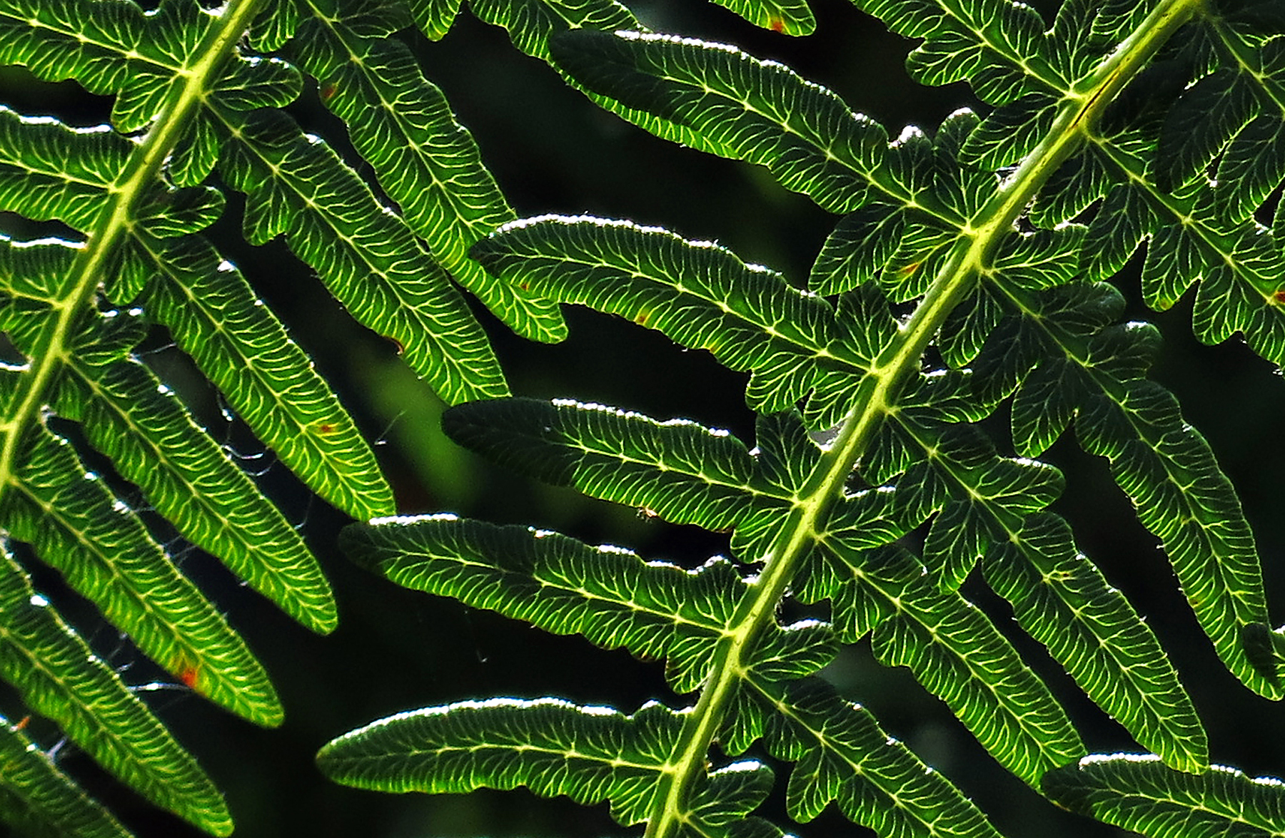 Fern leaf patterns
